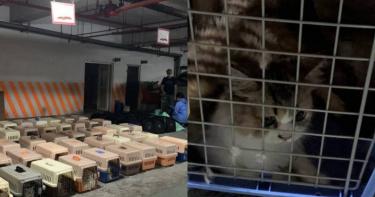 154隻貓安樂死!陳吉仲「提高刑責+罰則」:最高300萬 最快這周公告